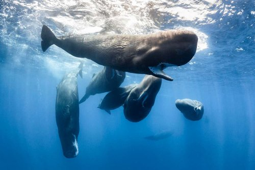 Most whales and sea turtles seem to have plastic in their bodies