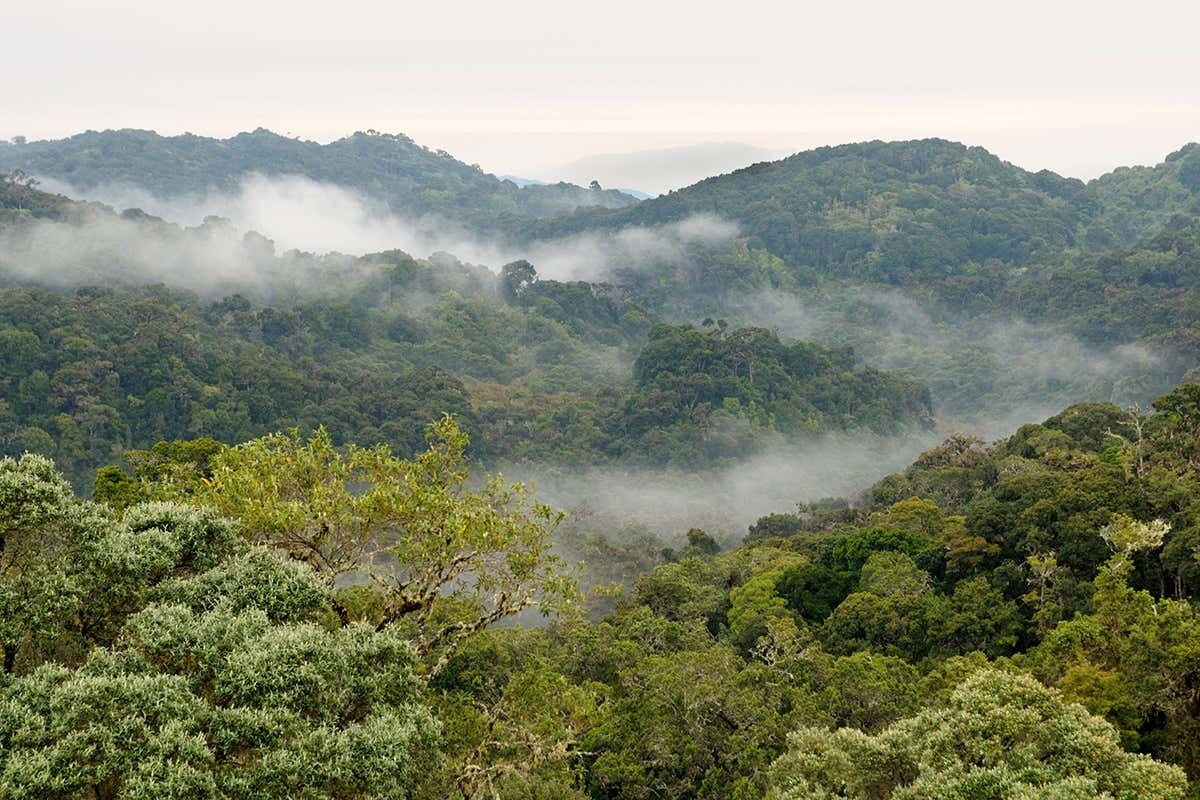 Global vegetation stores decade of human carbon emissions underground