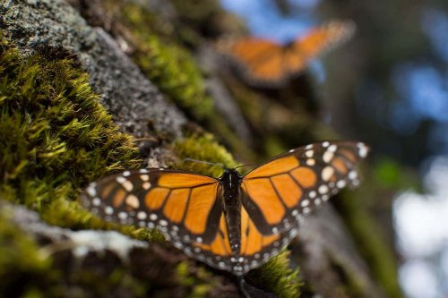 Huge global extinction risk for insects could be worse than we thought
