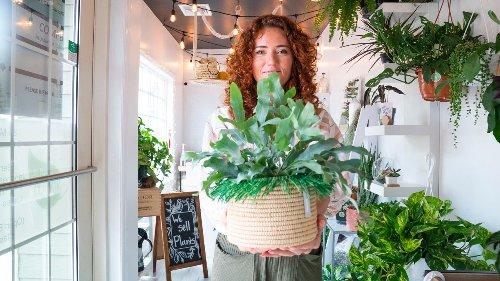 Where to buy houseplants on Long Island