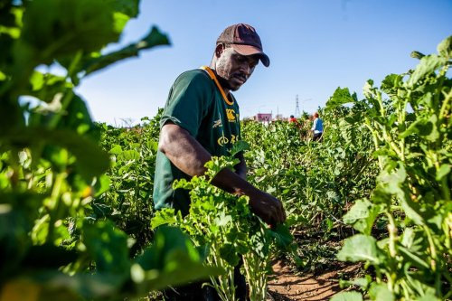 Agriculture is the green gold that can take South Africa forward