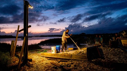 Oysters are tradition at beloved SC restaurant. Will rising tides soon threaten harvests?
