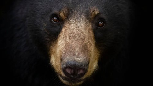 Teen sleeping in hammock at 12:30 a.m attacked by large bear in Great Smoky Mountains