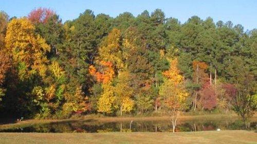 Falling tree kills 64-year-old man walking on trail in North Carolina park, police say
