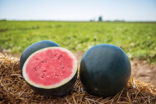 Mom shares clever hack for picking the perfect watermelon