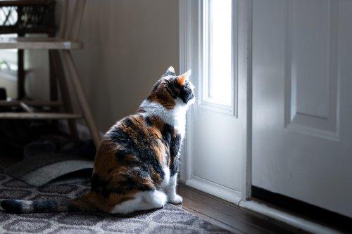 Cat 'turns into liquid' to squeeze under door in incredible video