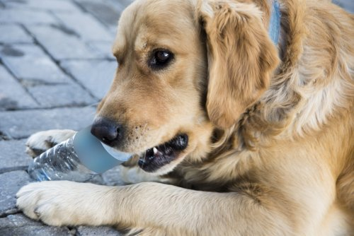 Golden retriever bites woman's drink out of her mouth in hilarious viral video