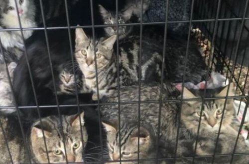 Crate full of cats and kittens found abandoned with no food or water