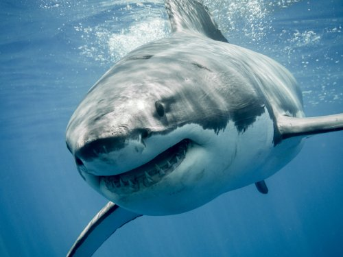 This is what a great white shark sees when you're swimming above