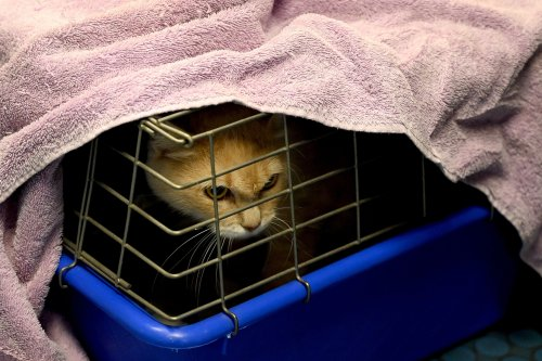 Cat that escaped from airplane carrier found safe after spending three weeks on runway