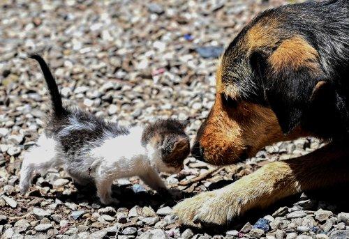 Heroic dog rescues abandoned kitten in heartwarming viral video