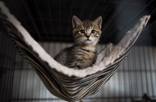 """Hundreds of cats die from mysterious disease, may be linked to potentially """"toxic"""" pet food"""