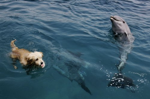 Dog and Dolphin kiss in heartwarming photo of unlikely friendship