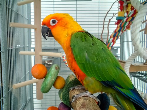 Parrot dances in time to Rick Ross in hilarious viral video