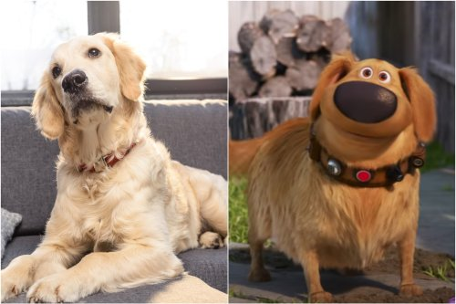 Golden retriever's reaction to seeing cartoon dog on TV is melting hearts online