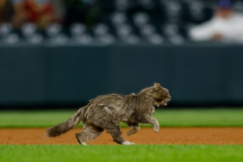 Hilarious video shows cat outwitting on-field officials at NY Yankees game