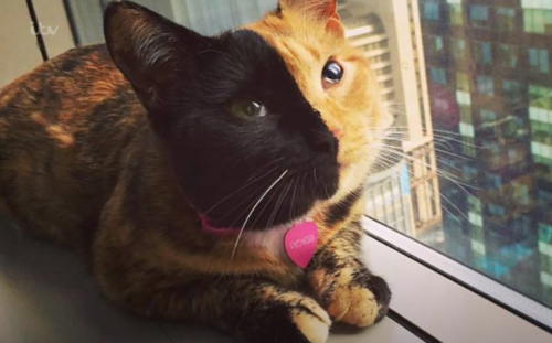 Two-faced cat goes viral with video proving she is natural