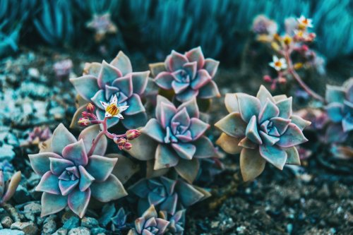 14 low maintenance outdoor plants for people who kill everything