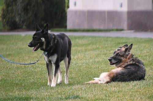 QAnon believers suggest secret message behind announcement of Biden dog's death