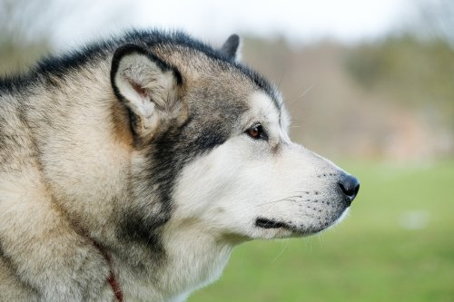 The 20 most obedient large dog breeds