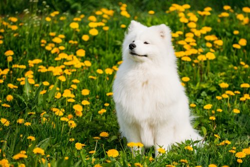 37 Dog breeds gaining popularity