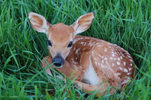Newborn deer in middle of road are saved by farmer in adorable video