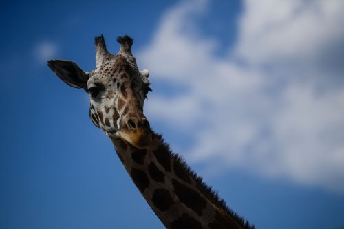 Video of giraffe lifting boy into air watched more than 1M times