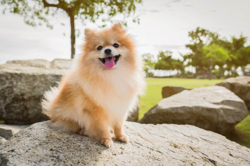 Pomeranian dog's angry glare in shower leaves internet in stitches