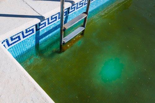 "Man finds ""swamp monster"" green pool beneath floor in Airbnb living room"