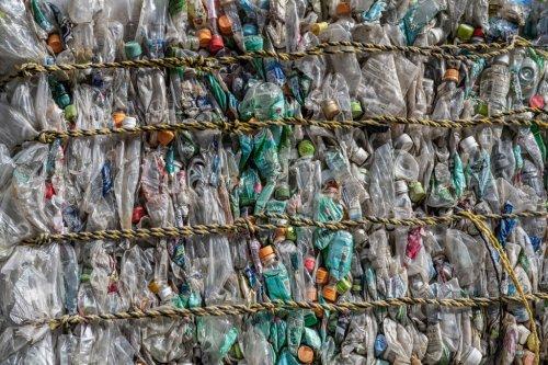 'Generator' turns plastic trash into edible protein
