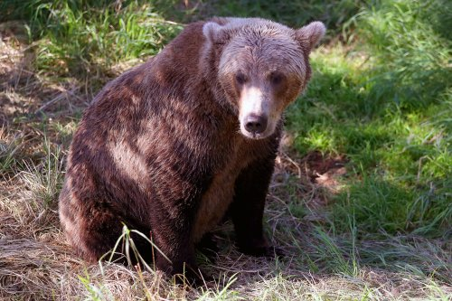 """Hiker missing after being """"charged by multiple bears"""" found alive"""