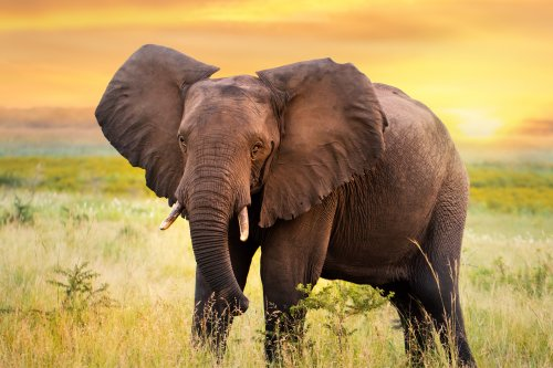 Woman asked what she would do with an elephant in 'bizarre' job application