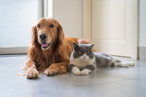 """Cat """"becomes a dog"""" by copying its behavior in adorable video"""