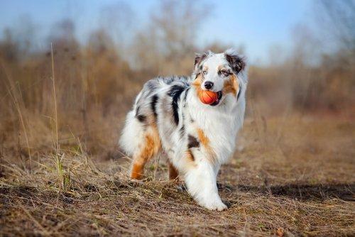 The smartest mid-size dog breeds