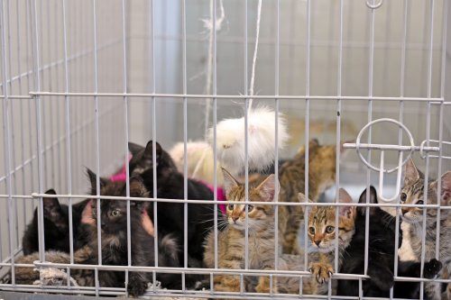"""Animal control responds to """"out of control"""" hoarding situation, rescues 133 cats"""
