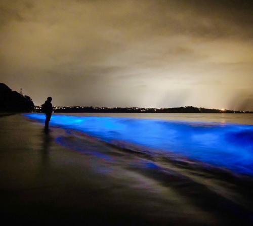 'Bio-Hunters' capture rare bioluminescence phenomenon on New Zealand beach