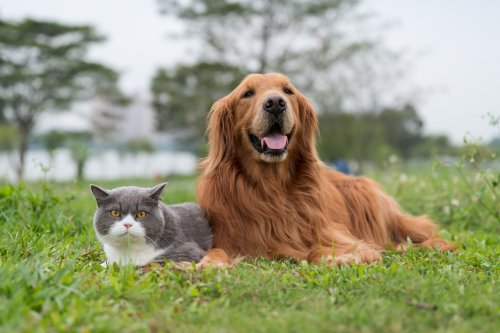 Dog takes cat to join family photo in adorable video