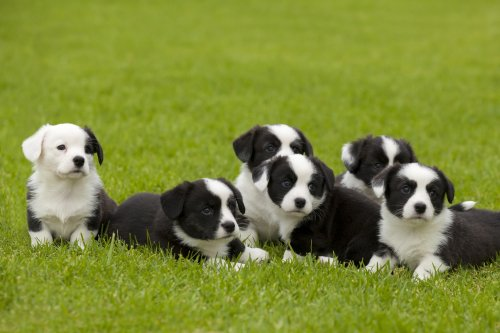 Video of adorable puppies choosing their own names is melting hearts online