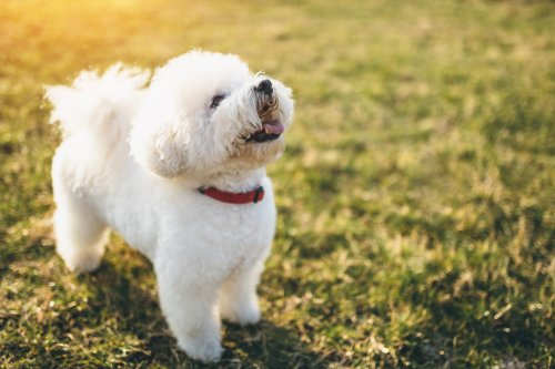 The 25 Most Obedient Small Dog Breeds