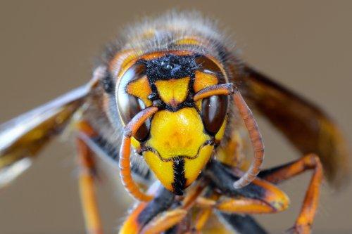 """Man swarmed by hundreds of deadly """"murder hornets"""" in horrifying video"""