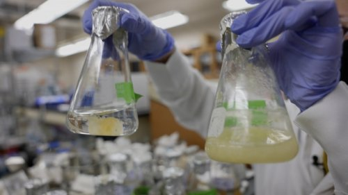 Scientists Use Fungi To Make Cement