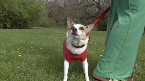 KSHB: Temporary Foster Program Helps Families And Pets In Crisis