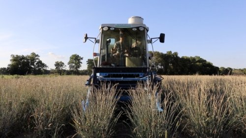 This Earth-Friendly Crop May Change Agriculture For The Better