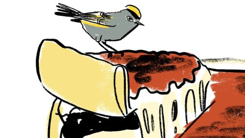 Relating to Birds