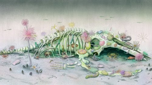 A Whale's Afterlife