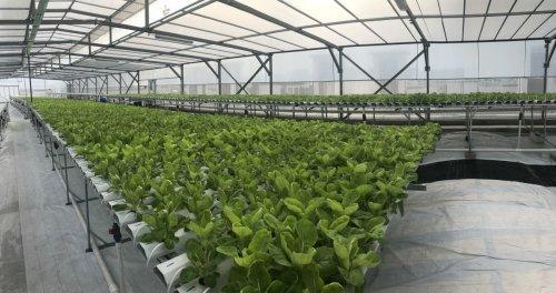 Singapore Shows What Serious Urban Farming Looks Like