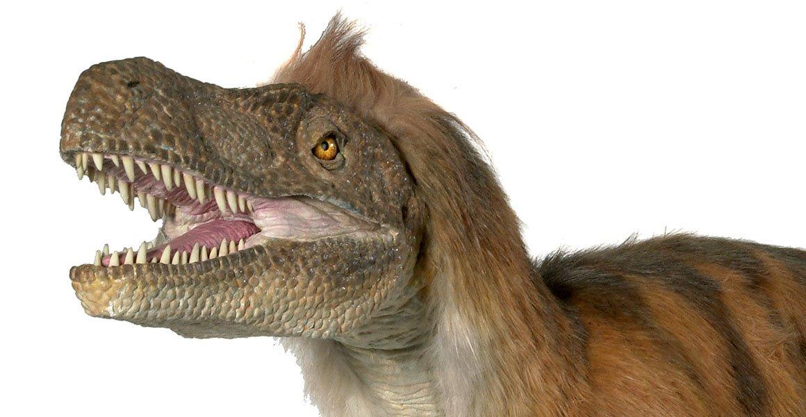 Vicious Velociraptor: tales of a turkey-sized dinosaur