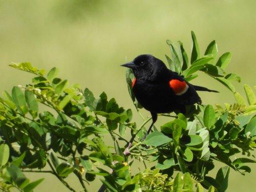 Birding photography Tips with Nikon Super-Zoom Digital Cameras | Nikon