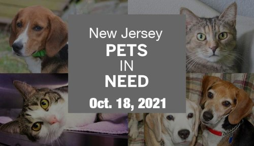 N.J. pets in need: Oct. 18, 2021
