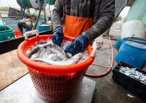 N.J. fishing industry to get another $9.5M for COVID relief